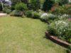 5月に芝生が茶色くなる原因と対策